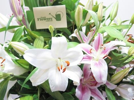 freshflowers.com.au review flower arrangment floral bouquet